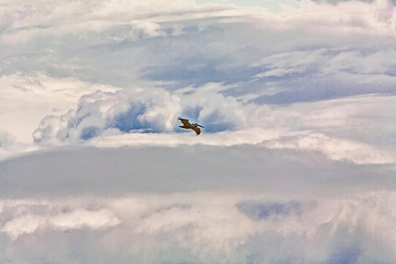 Kite boarding, Hatteras North Carolina