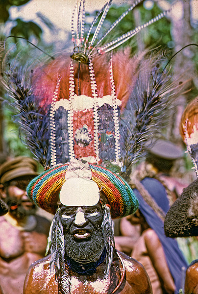 Highlands Man -  Bird of Paradise feathers, human hair wig covering similar to a bilum. Body shines because it's covered with grease. Papua New Guinea's famous Goroka Show Sing-Sing.  A chance for villages from around the highlands to come and show their stuff.  A cross between a Native American Pow-Wow and a county fair.