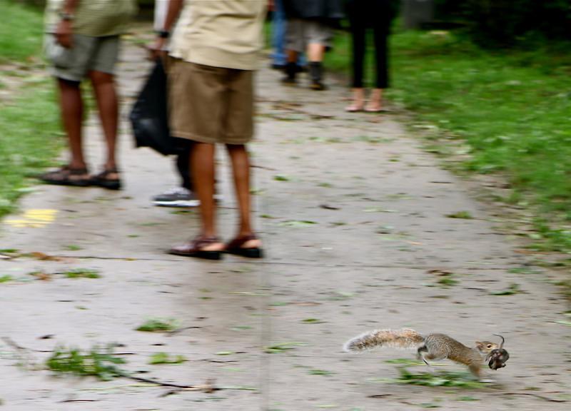 Mama squirrel tries to rescue baby squirrel.