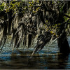 Louisiana Bayou Jean Lafitte 13 March 2018