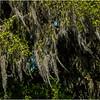 Louisiana Bayou Jean Lafitte 23 March 2018