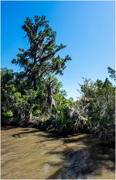 Louisiana Bayou Jean Lafitte 1 March 2018
