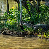 Louisiana Bayou Jean Lafitte 24 March 2018