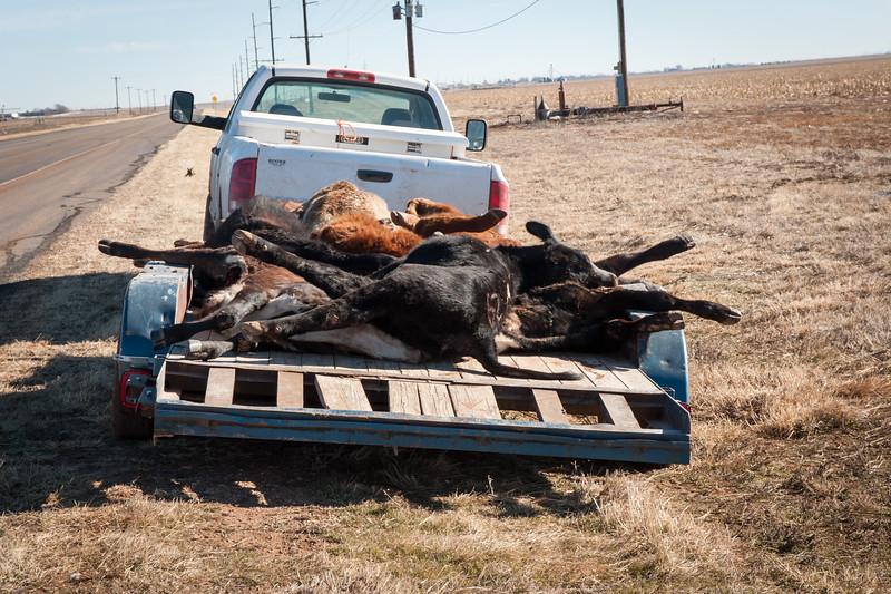 2015 Texas Blizzard Working Ranch Magazine