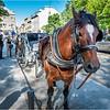 Canada Quebec PQ 38 Upper Town June 2018