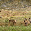 Scotland Glen Etive Red Deer 2 May 2019