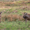 Scotland Glen Etive Red Deer 3 May 2019