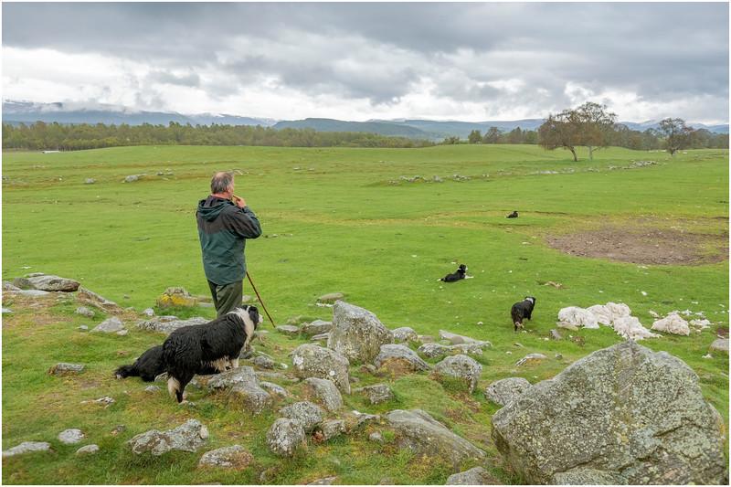Scotland Kincraig Leault Farm 7  May 2019