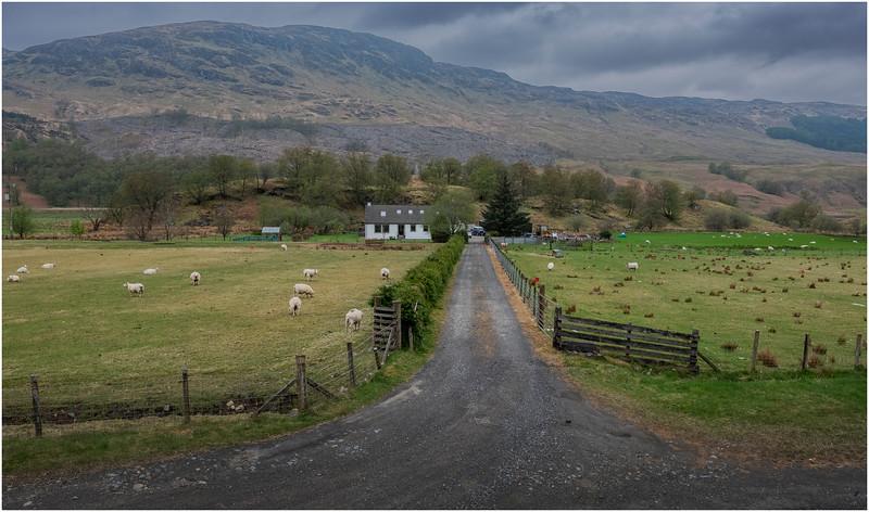 Scotland BenMore Farm 2  May 2019
