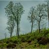 Scotland Trossachs Treescape 3 May 2019