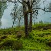 Scotland Trossachs Treescape 2 May 2019