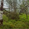 Scotland Trossachs Treescape 4 May 2019