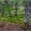 Scotland Trossachs Treescape 1 May 2019