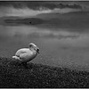 Scotland Loch Lomond 2 BW May 2019