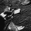 Shark fin / Barbatana de tubarão