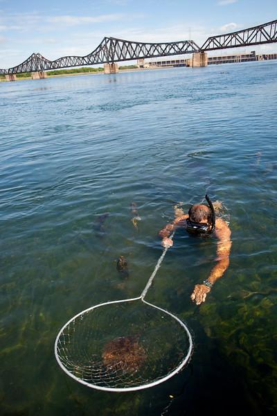 Catching stingrays / Capturando raias