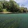Freshwater vegetation / Vegetação aquática