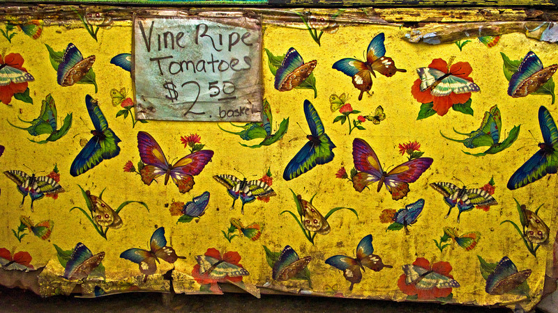 Vine Ripe Tomatoes, Plant City, FL 2008