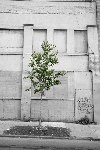 A tree grows in The Bronx