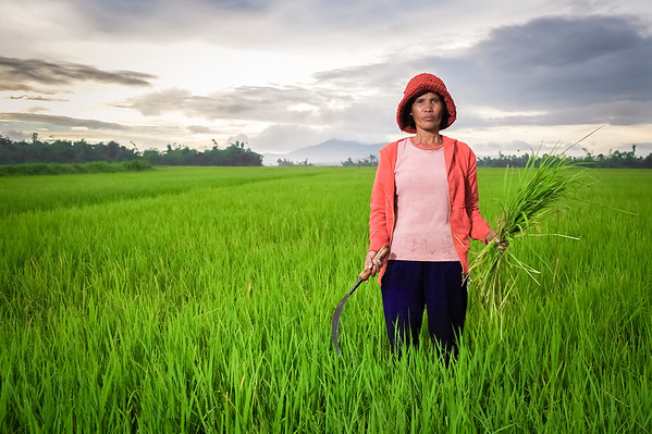 The Rice farmer