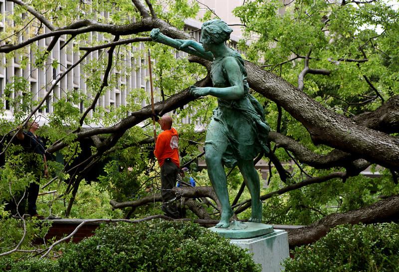 Fallen tree at Barnard College.