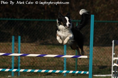 Dog Agility 2010