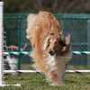 Dog Agility Trials : 13 galleries with 3597 photos