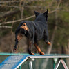 ASCA Agility Trial, Mebane, NC - March 30, 2013