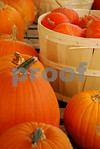 SEPTEMBER PUMPKINS!!<br /> Stephentown, New York<br /> September 22, 2012