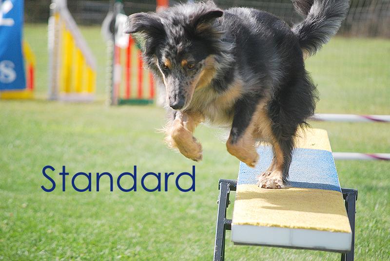 Standard Title Card