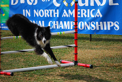 Dogs On Course in North America (DOCNA)