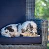 Puppies 8 weeks-335