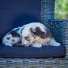 Puppies 8 weeks-336