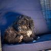 Puppies 8 weeks-307