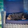 Puppies 8 weeks-321