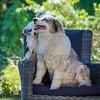 Puppies 8 weeks-350