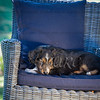 Puppies 8 weeks-322