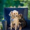 Puppies 8 weeks-325