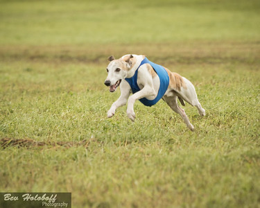 Dog Events 2016