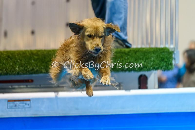 2015 Winter Dog Classic - NADD/AKC Diving Dog - Saturday, Jan. 17, 2015 - Frame: 1717