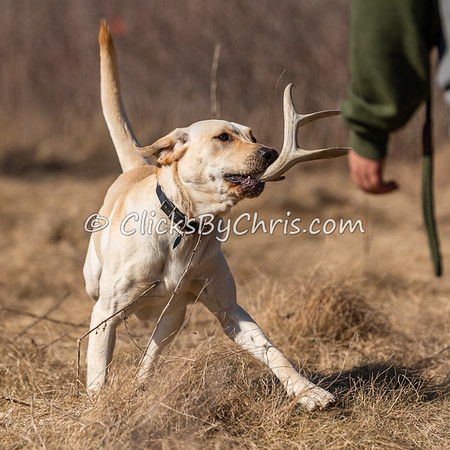 Shed Hunt: Youth 03/20/2021