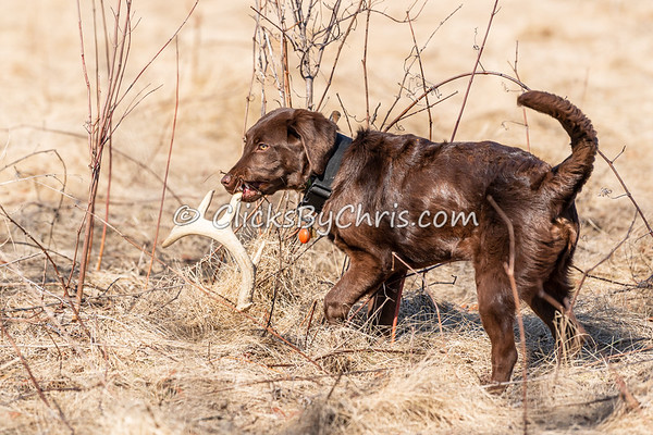 Shed Hunt: Working 03/20/2021