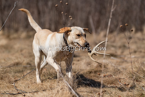 Shed Hunt: Youth 03/21/2021