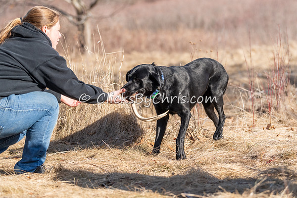 Shed Hunt: Working 03/21/2021