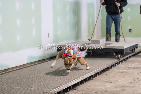 NIKA Weight Pull - Southtown K9 - Saturday, March 24, 2018