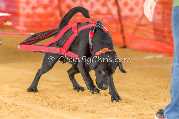 NIKA UKC Weight Pull Natural Surface - Northern Illinois K9 Association - Lee County Fair Association - Saturday, March 30, 2019