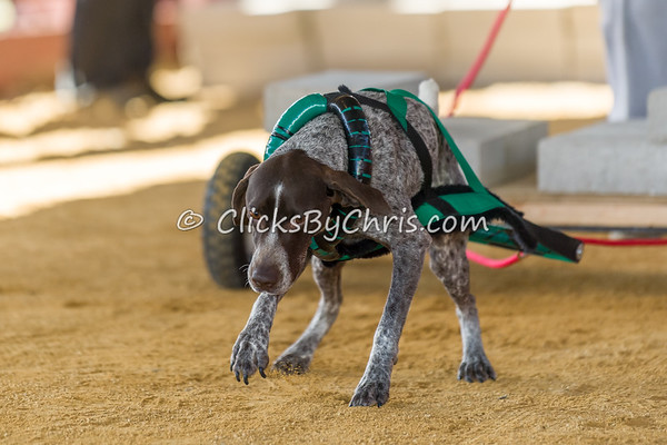 NIKA UKC Weight Pull Natural Surface - Northern Illinois K9 Association - Lee County Fair Association - Sunday, March 31, 2019