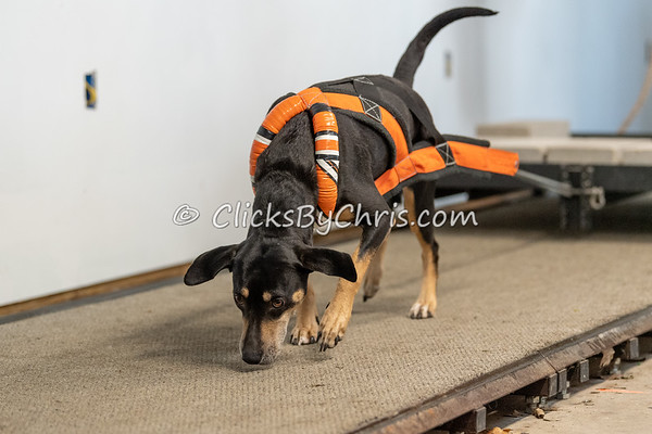 NIKA Weight Pull Rails - Northern Illinois K9 Association - Southtown K9 - Sunday, April 28, 2019