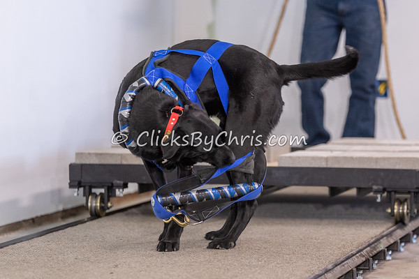 NIKA Weight Pull - Northern Illinois K9 Association - Southtown K9 - Saturday, April 28, 2018