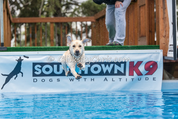 Southtown K9 Trial - Sunday, May 1, 2016 - Frame: 8891